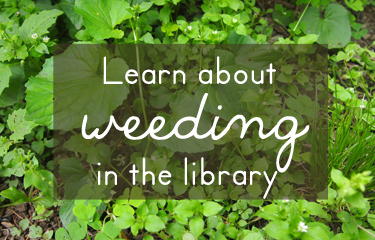 Learn about weeding in the library